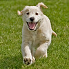 The happiest puppy on the Planet! :